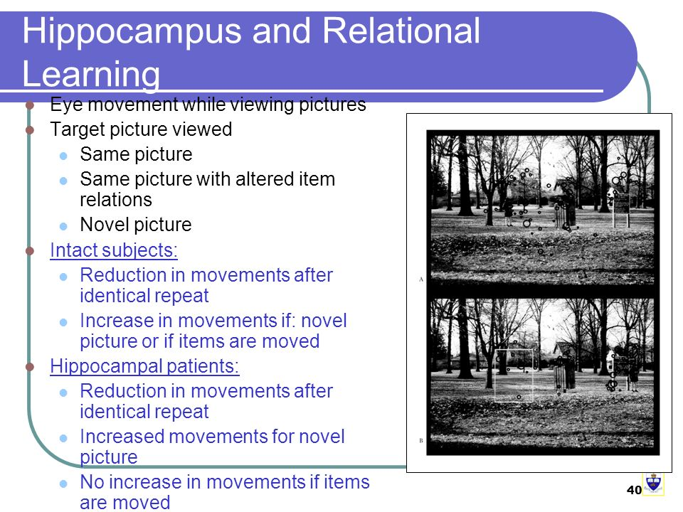 40 Hippocampus and Relational Learning Eye movement while viewing pictures Target picture viewed Same picture Same picture with altered item relations Novel picture Intact subjects: Reduction in movements after identical repeat Increase in movements if: novel picture or if items are moved Hippocampal patients: Reduction in movements after identical repeat Increased movements for novel picture No increase in movements if items are moved
