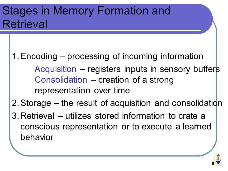 5 Stages in Memory Formation and Retrieval 1.Encoding – processing of incoming information Acquisition – registers inputs in sensory buffers Consolidation – creation of a strong representation over time 2.Storage – the result of acquisition and consolidation 3.Retrieval – utilizes stored information to crate a conscious representation or to execute a learned behavior