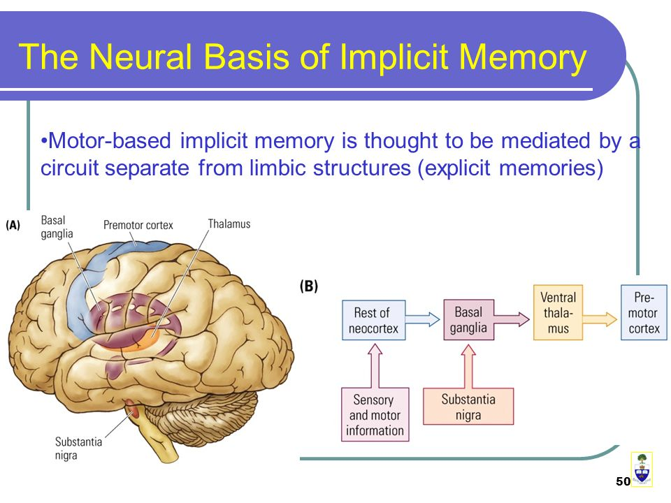 50 The Neural Basis of Implicit Memory Motor-based implicit memory is thought to be mediated by a circuit separate from limbic structures (explicit memories)
