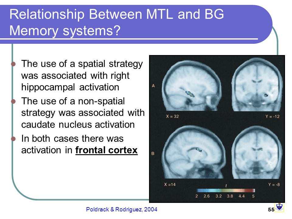 55 Relationship Between MTL and BG Memory systems.
