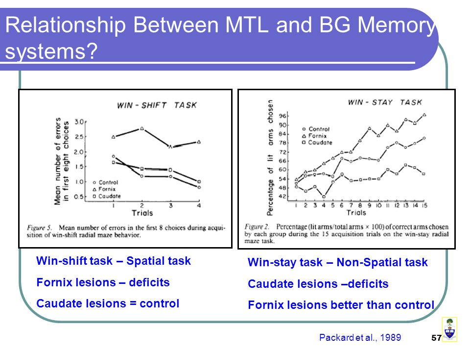 57 Relationship Between MTL and BG Memory systems.