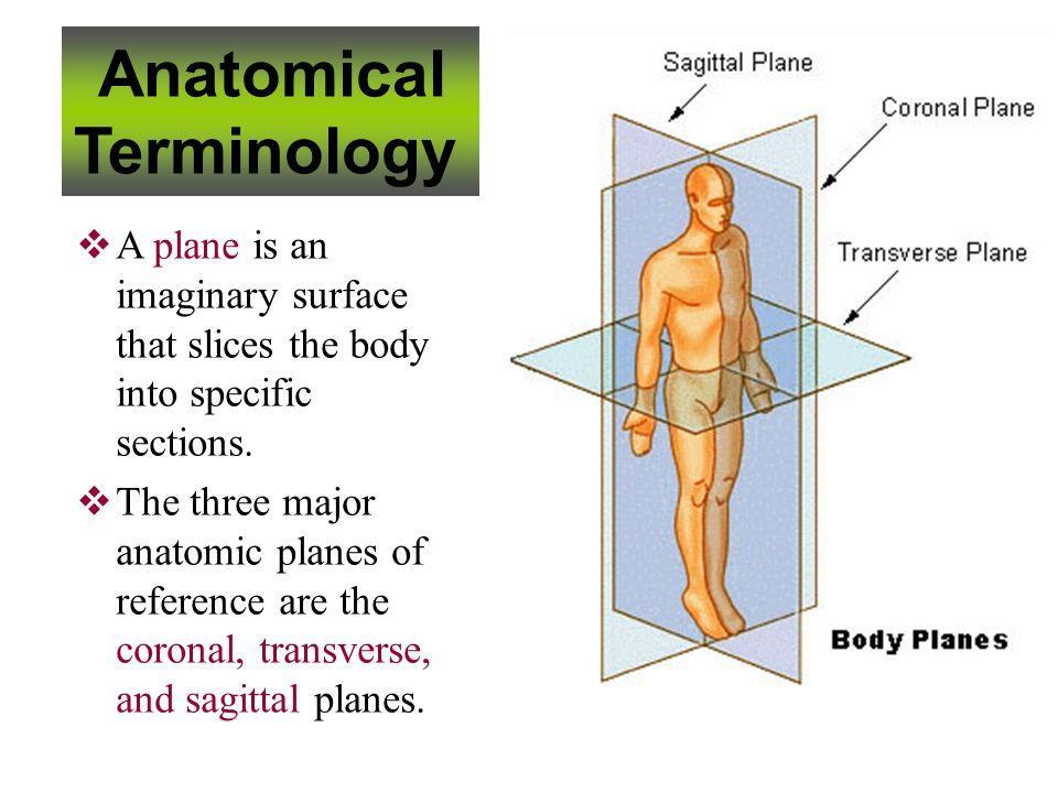 Fantastic Sagittal Plane Definition Anatomy Elaboration - Anatomy ...