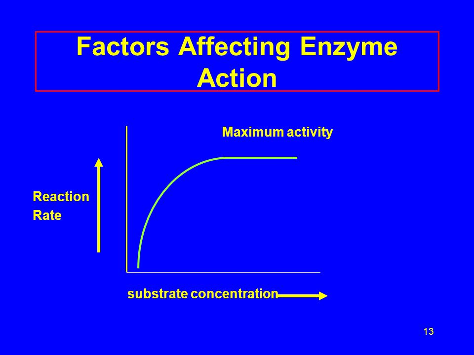 13 Factors Affecting Enzyme Action Maximum activity Reaction Rate substrate concentration