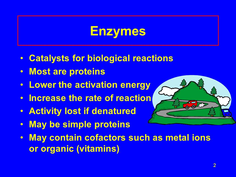 2 Enzymes Catalysts for biological reactions Most are proteins Lower the activation energy Increase the rate of reaction Activity lost if denatured May be simple proteins May contain cofactors such as metal ions or organic (vitamins)