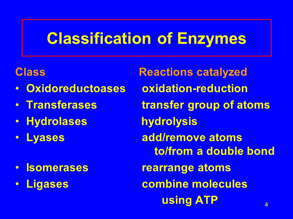 4 Classification of Enzymes Class Reactions catalyzed Oxidoreductoases oxidation-reduction Transferases transfer group of atoms Hydrolases hydrolysis Lyases add/remove atoms to/from a double bond Isomerases rearrange atoms Ligases combine molecules using ATP