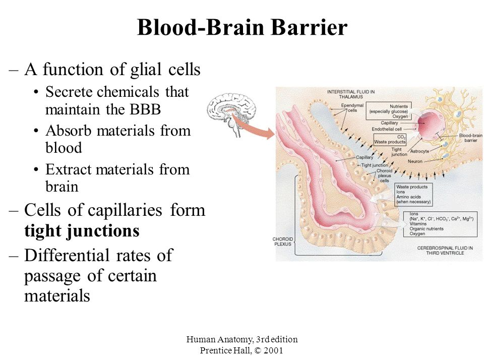 The Brain and Cranial Nerves Chapter 9c. The Brain –Introduction ...