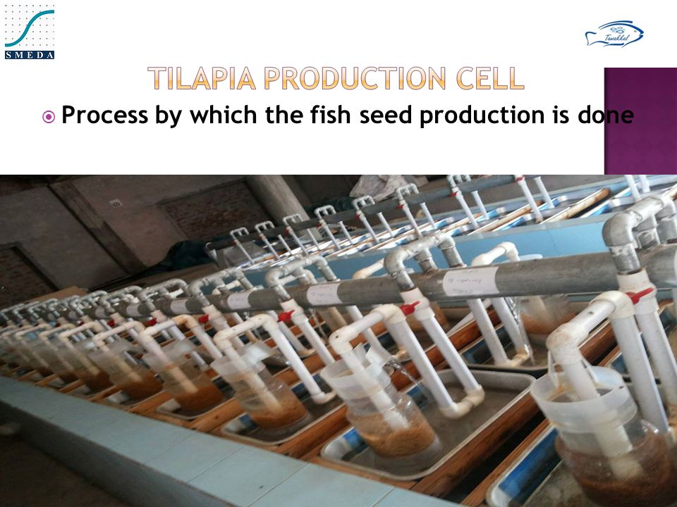  Process by which the fish seed production is done