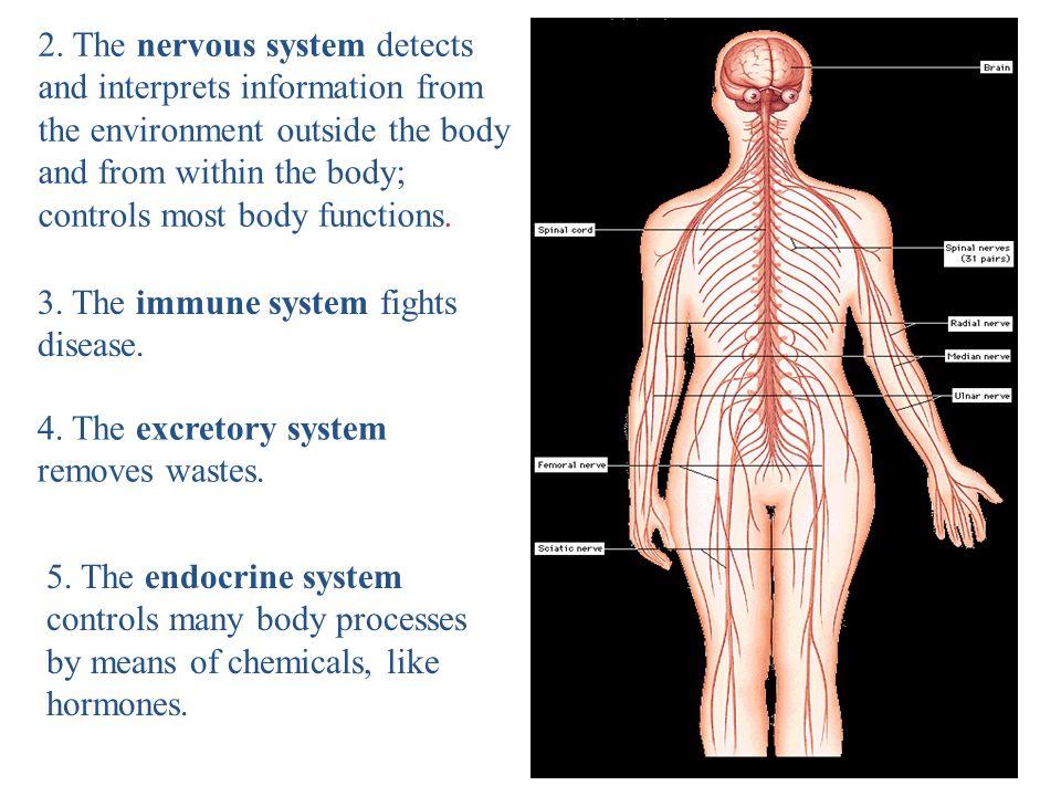 Levels Of Organization Multicellular Organisms I First Level