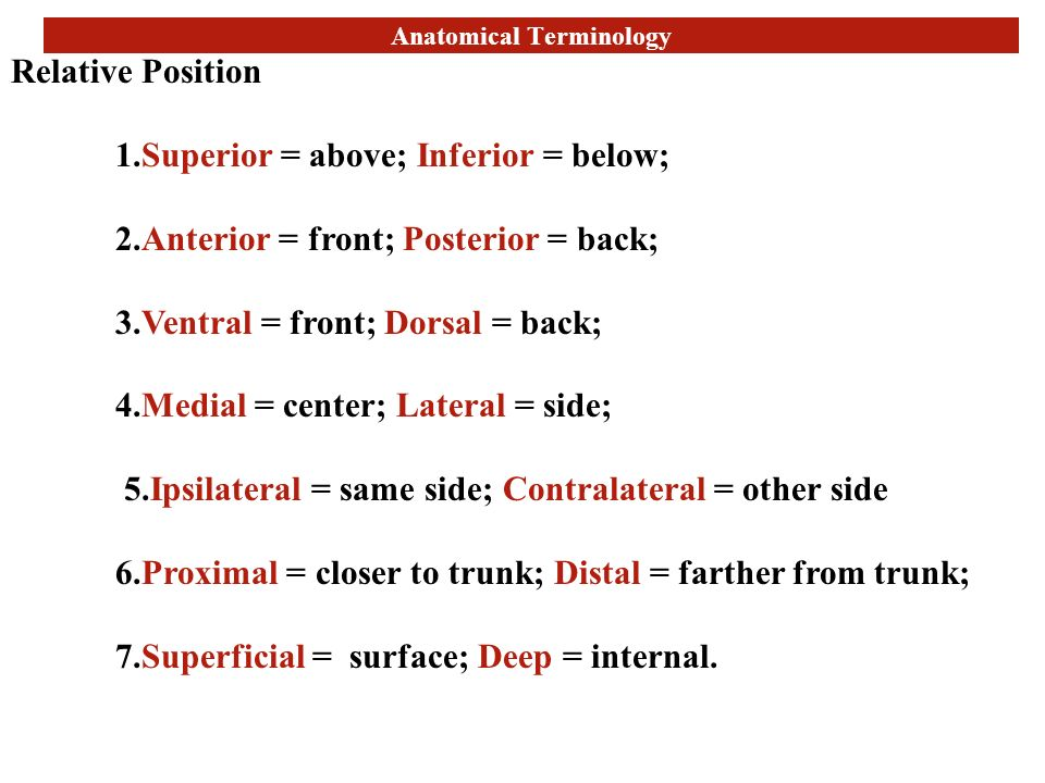Attractive What Does Ipsilateral Mean In Anatomy Ideas - Anatomy And ...