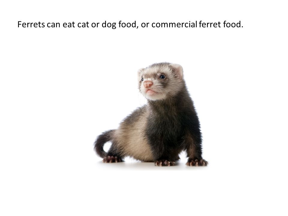 Nutrition for dogs, cats and exotics. Food is defined as any ...