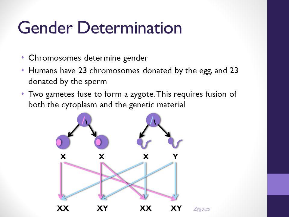 determining-chromosomes-in-sperm-bbw-oral-sex-positions