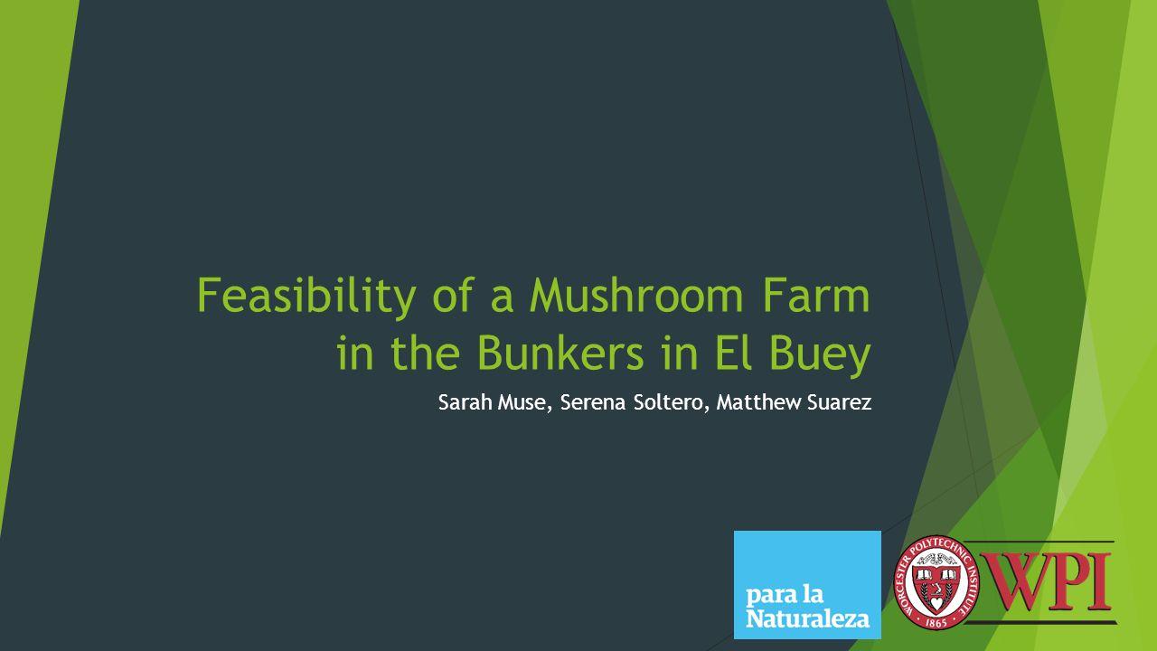 Feasibility of a Mushroom Farm in the Bunkers in El Buey Sarah Muse