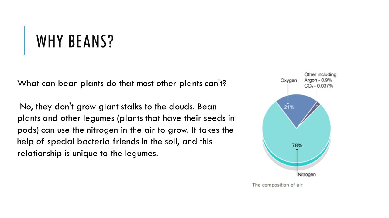 the nitrogen cycle. why beans? what can bean plants do that most