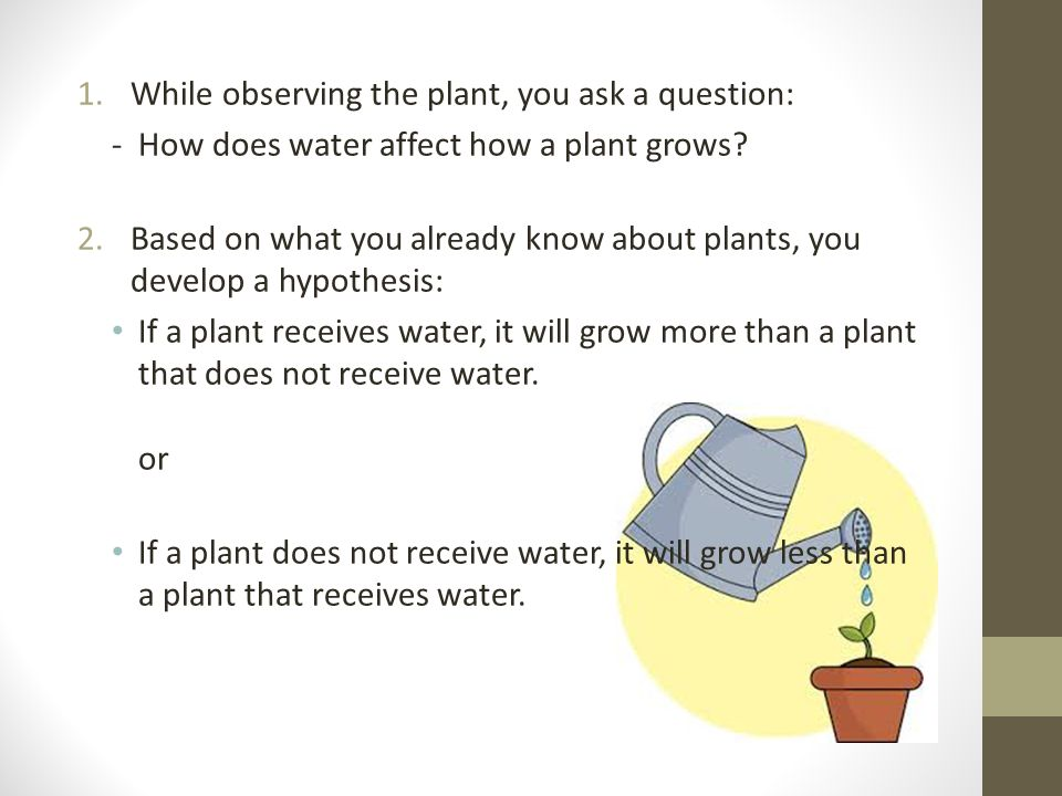 1.While observing the plant, you ask a question: - How does water affect how a plant grows.