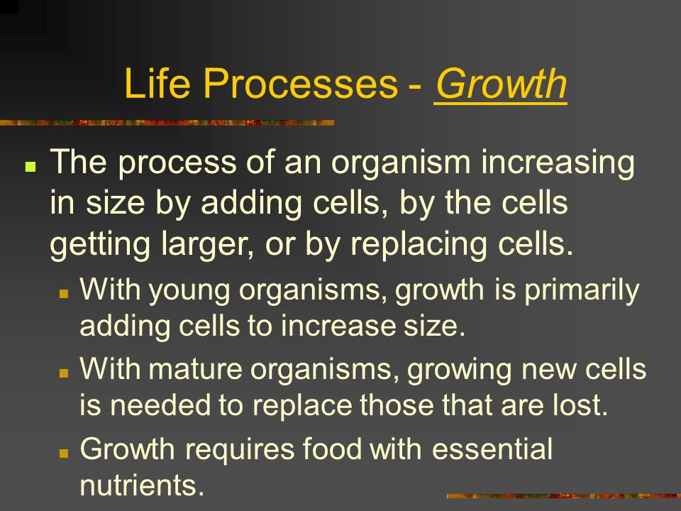 growth life process