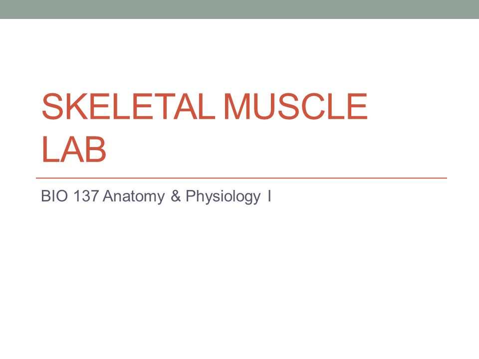SKELETAL MUSCLE LAB BIO 137 Anatomy & Physiology I. - ppt download