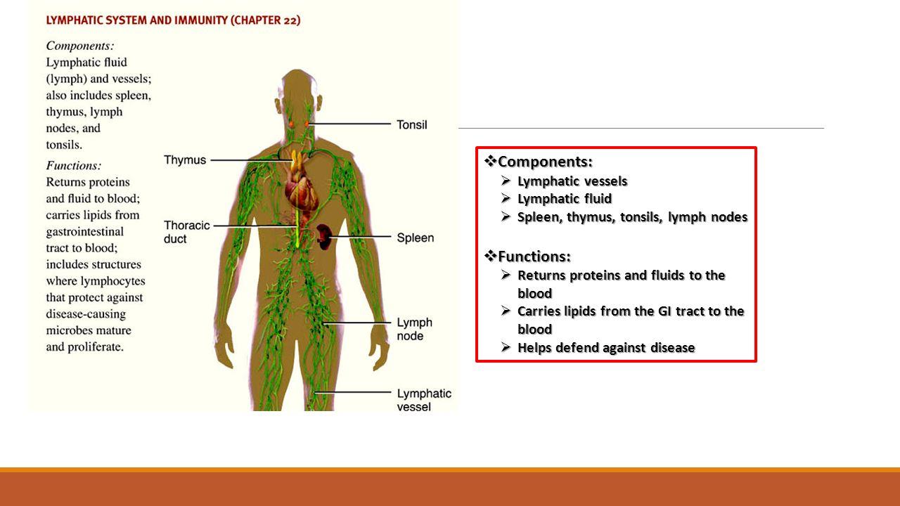 Ziemlich Thymus Anatomy And Physiology Fotos - Anatomie Ideen ...