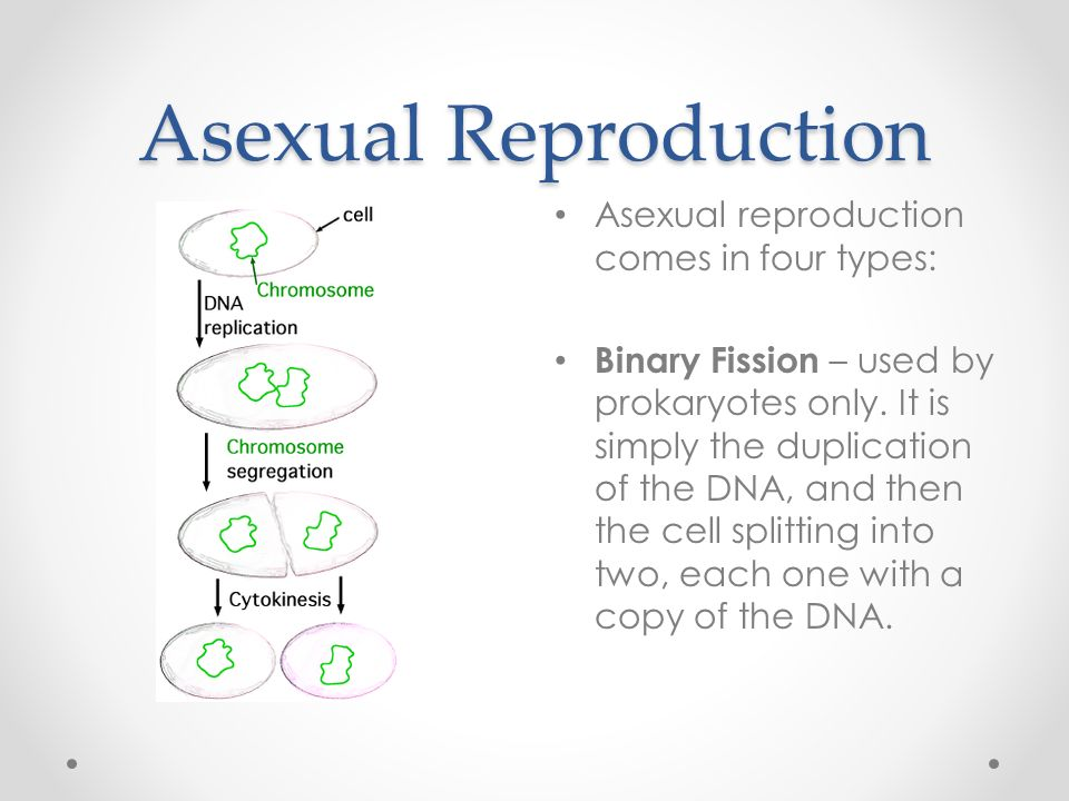 What does reform mean give two examples of asexual reproduction