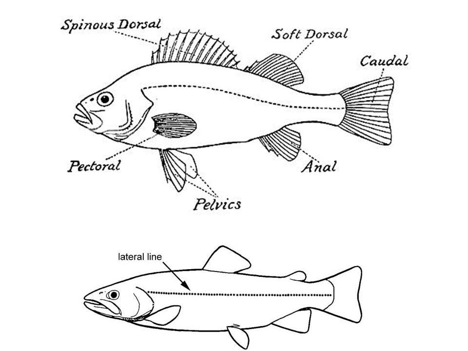 Fish Behavior Schooling Large Association Of Individuals