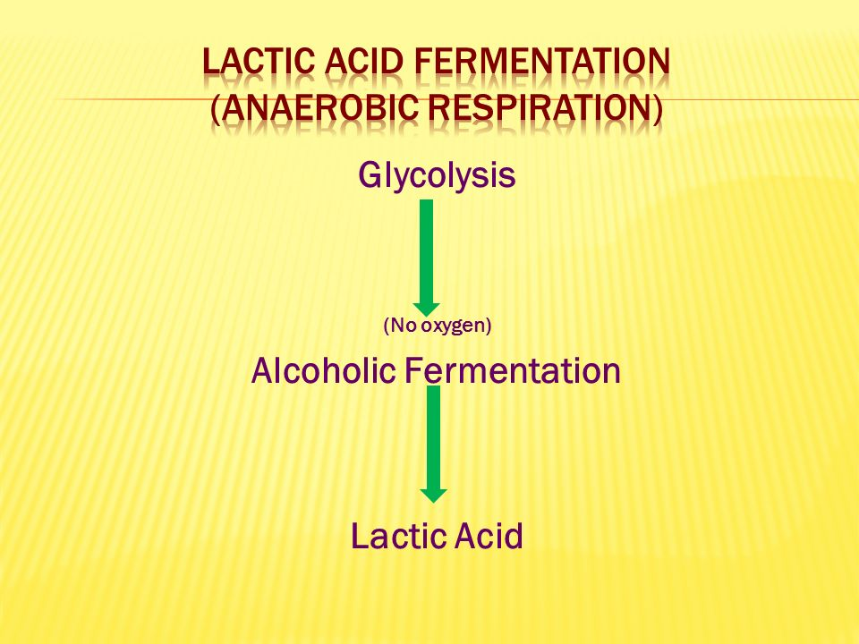Glycolysis (No oxygen) Alcoholic Fermentation Lactic Acid