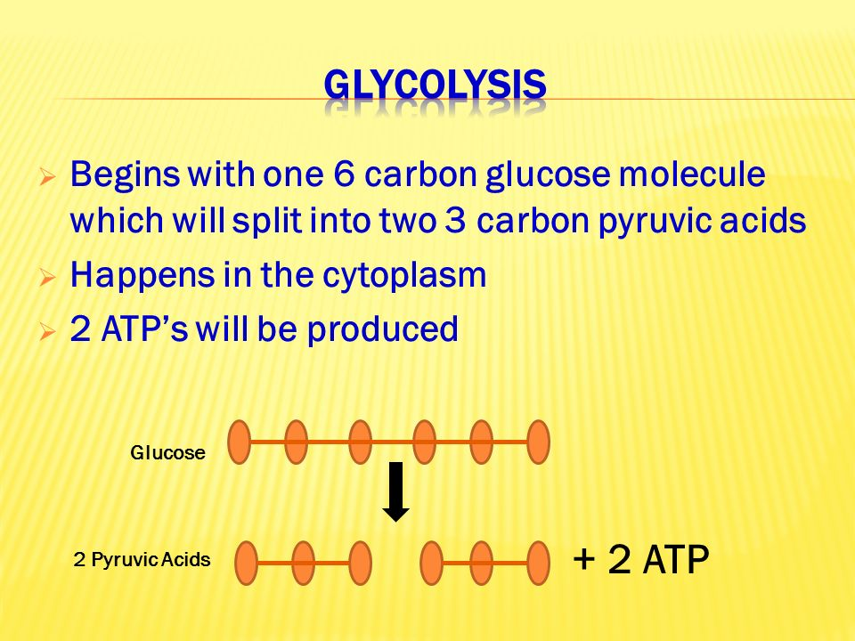  Begins with one 6 carbon glucose molecule which will split into two 3 carbon pyruvic acids  Happens in the cytoplasm  2 ATP's will be produced Glucose 2 Pyruvic Acids + 2 ATP