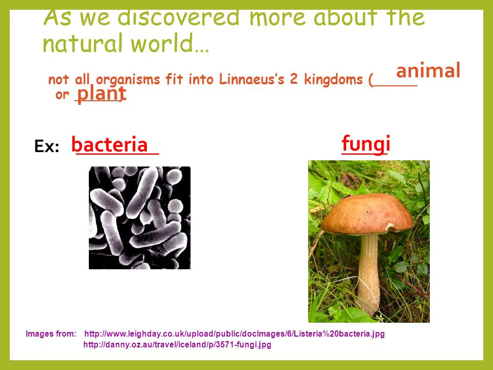As we discovered more about the natural world… not all organisms fit into Linnaeus's 2 kingdoms (_____ or _____) Ex: _________ _____ Images from:     plant animal bacteria fungi
