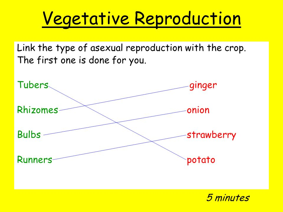 Vegetative reproduction asexual reproduction worksheet