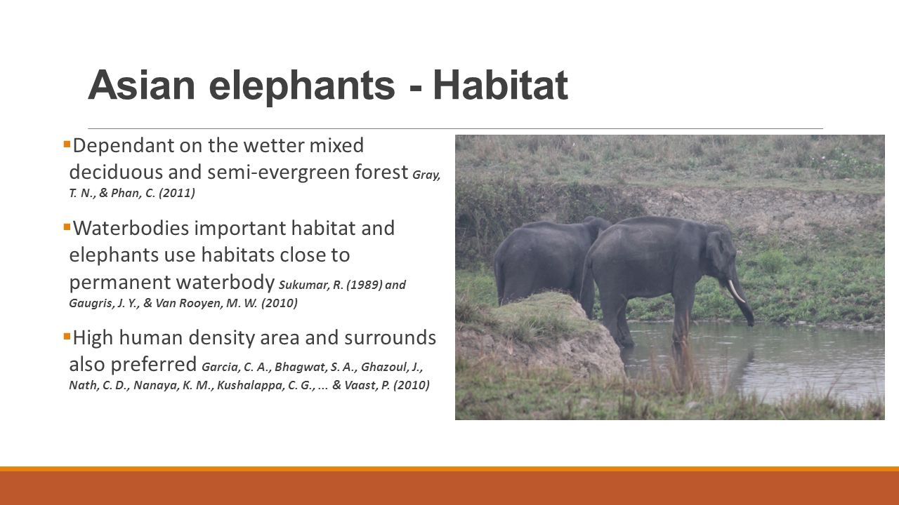 Asian elephants - Habitat  Dependant on the wetter mixed deciduous and semi-evergreen forest Gray, T.