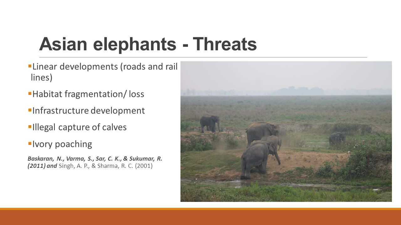 Asian elephants - Threats  Linear developments (roads and rail lines)  Habitat fragmentation/ loss  Infrastructure development  Illegal capture of calves  Ivory poaching Baskaran, N., Varma, S., Sar, C.