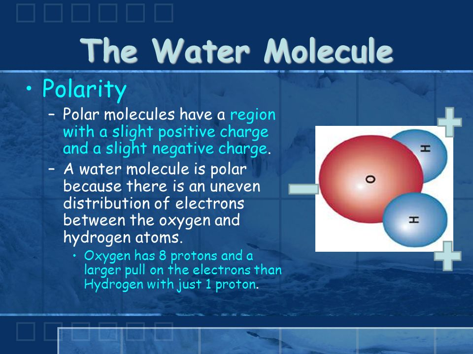 The Water Molecule Polarity –Polar molecules have a region with a slight positive charge and a slight negative charge.