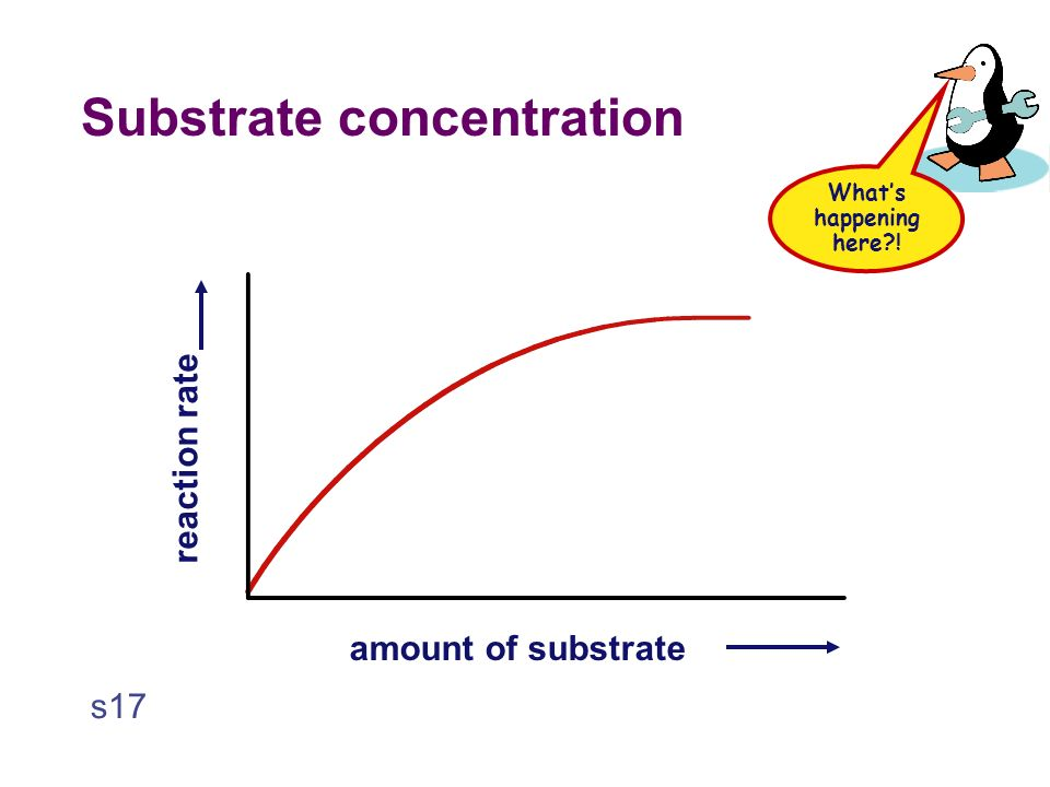 Substrate concentration  Effect on rates of enzyme activity  as increase amount of substrate = increases how fast the reaction happens  more substrate = more frequently they collide with enzyme