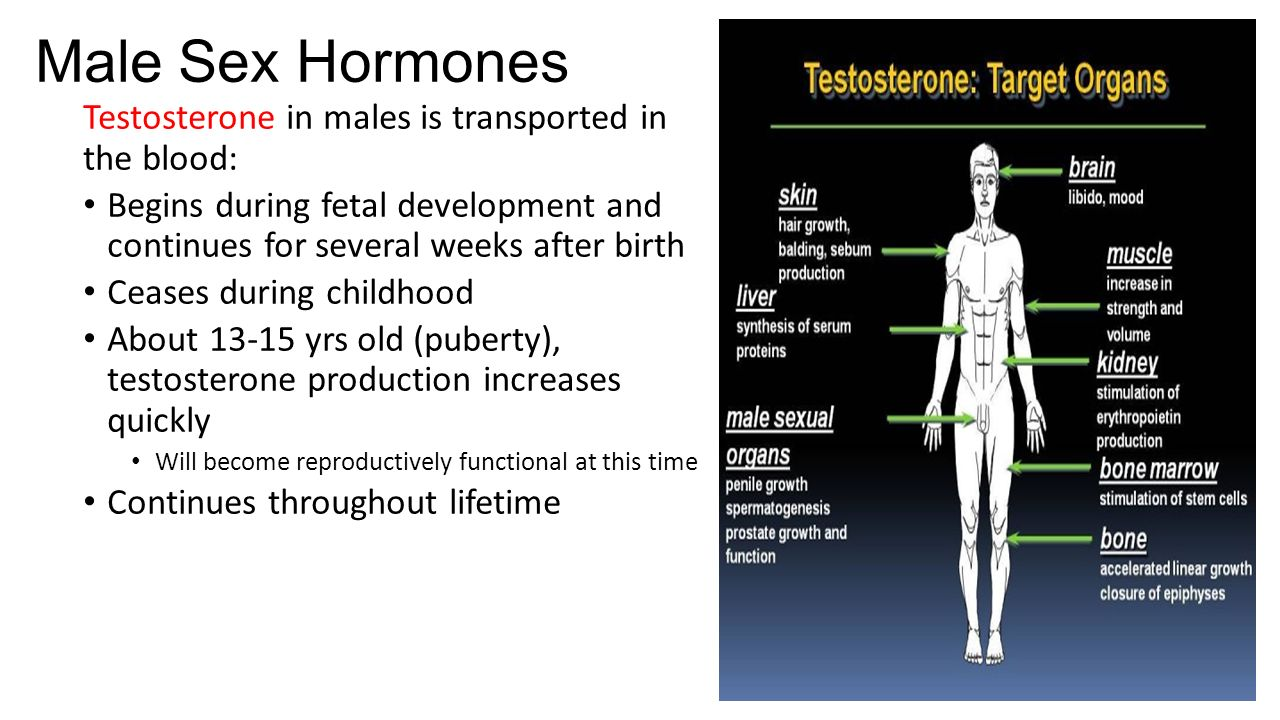 Sex male sex hormones include high levels of