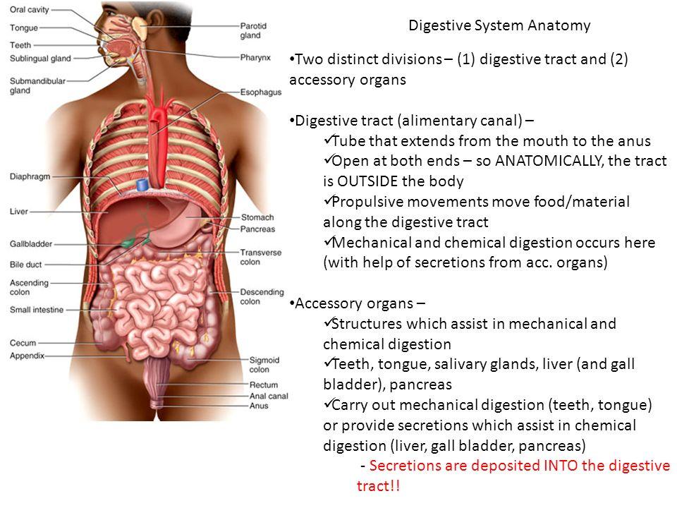Biology 322 Human Anatomy Digestive System Digestive System
