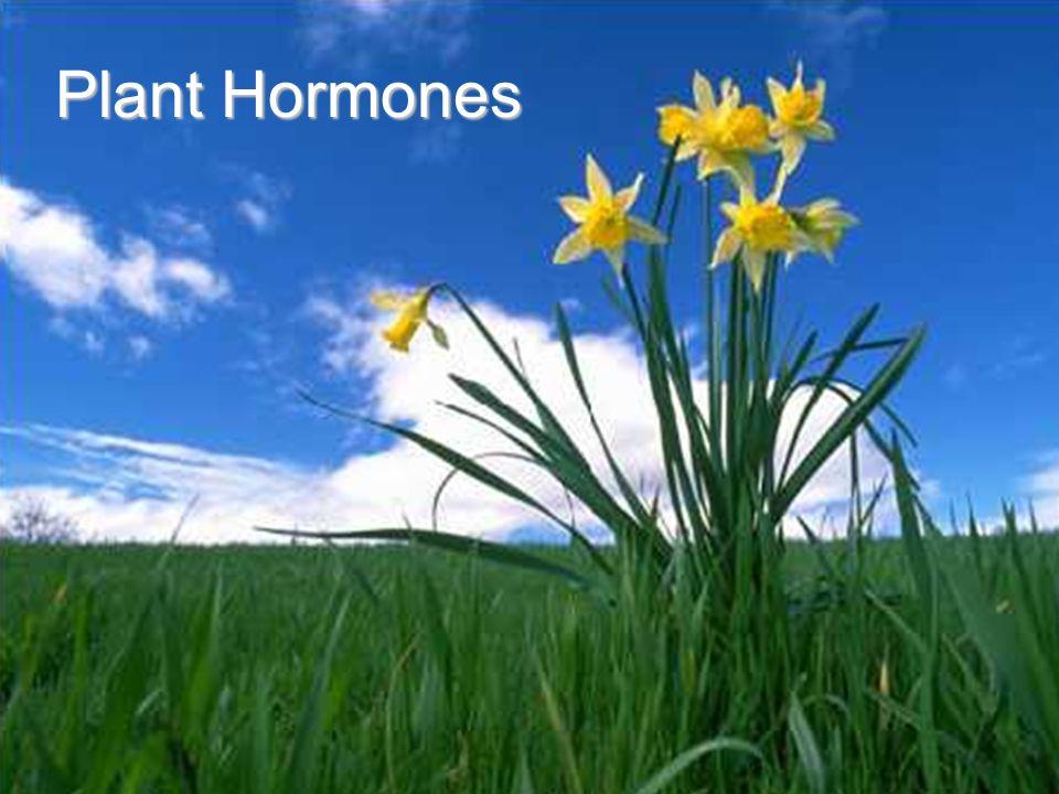 Plant growth regulators | plant hormone | auxin.
