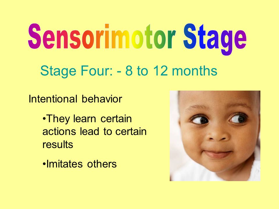sensorimotor stage