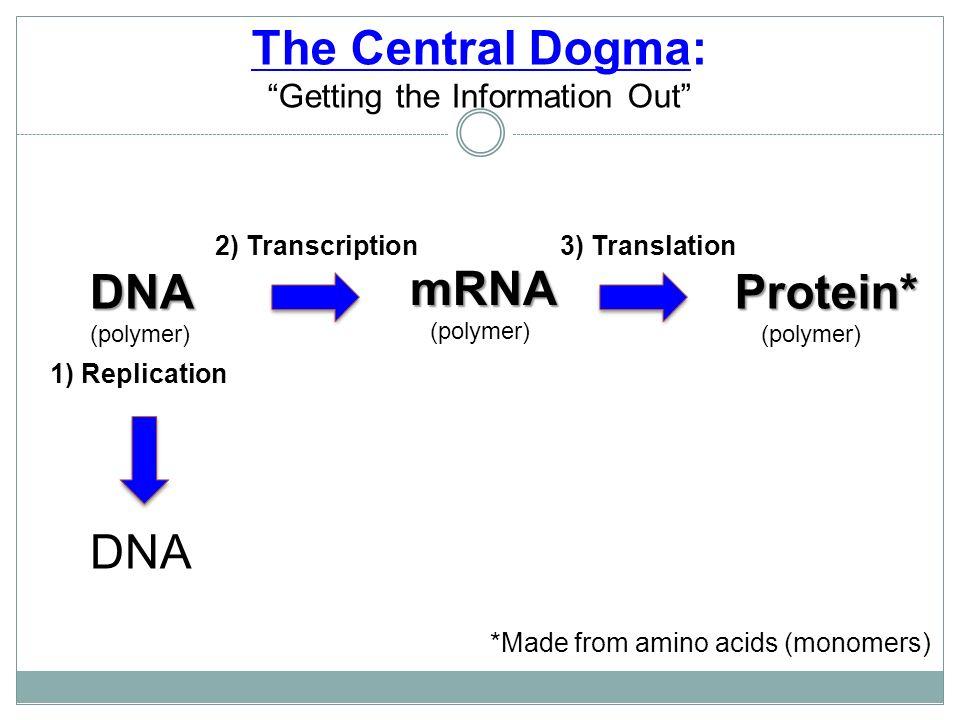 amino acids dating dating sarasota