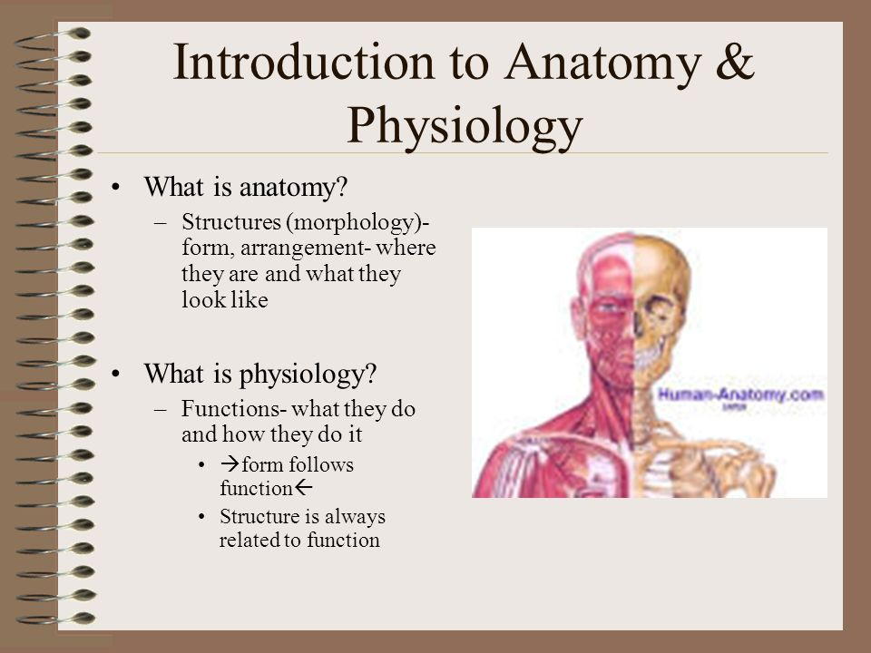 Introduction to Anatomy & Physiology What is anatomy? –Structures ...