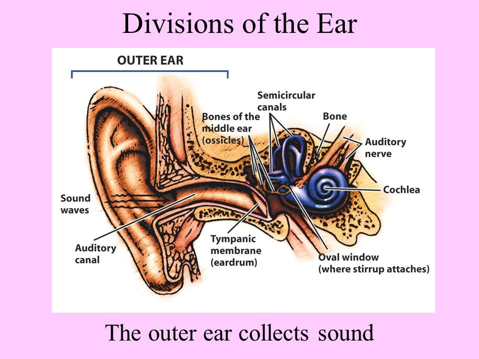 Hearing How Do We Hear Our Essential Questions What Are The Major