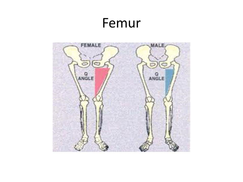 Objective: SWBAT will describe how bone is formed  SWBAT distinguish