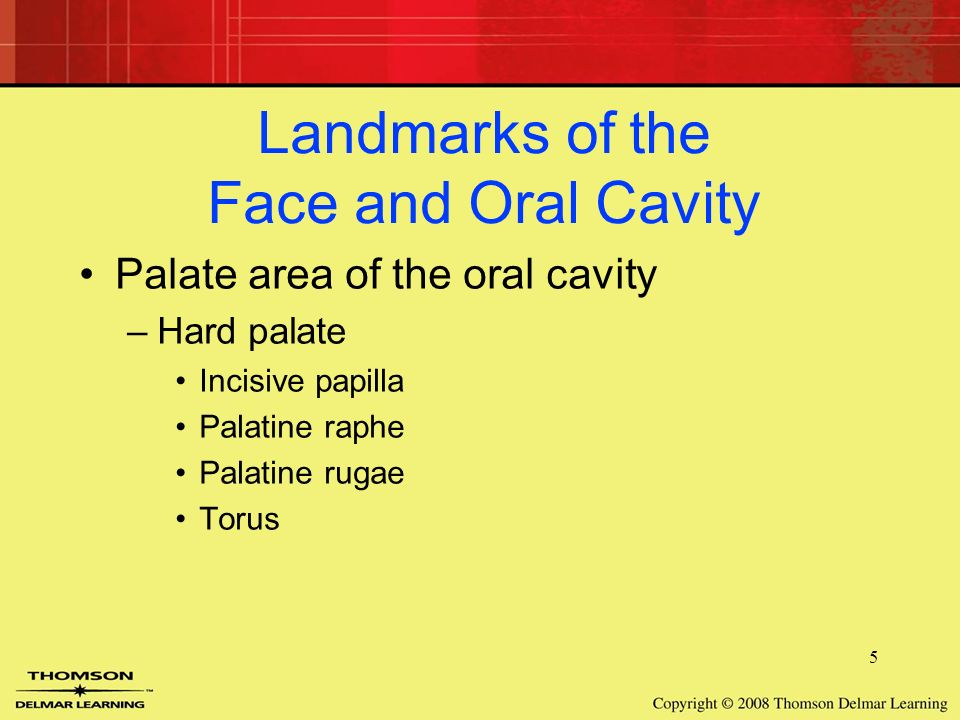 7 Head and Neck Anatomy. 2 Landmarks of the Face and Oral Cavity ...