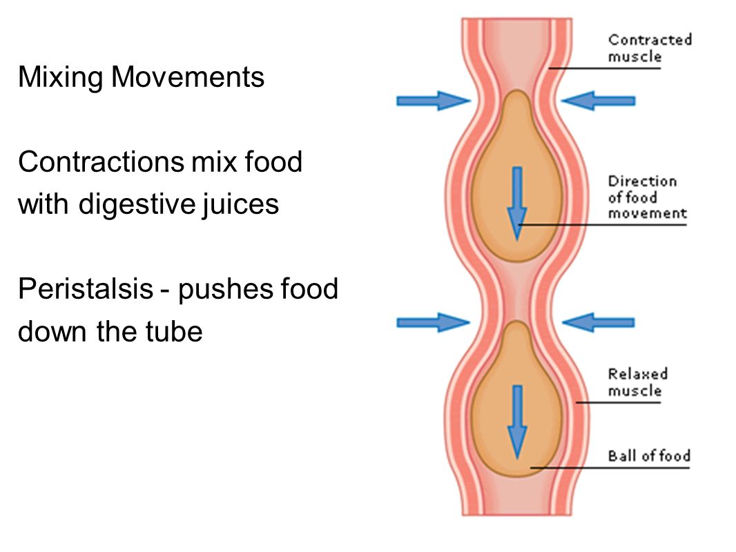 The Digestive System Chapter 15 from - ppt download