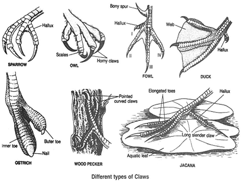 diagram of bird running box wiring diagram Evolution of Birds Diagram diagram types of birds electrical wiring diagrams diagram of physical features of birds diagram of bird running