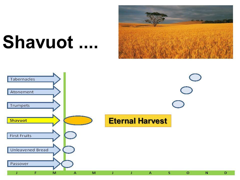 Shavuot     Eternal Harvest  Feast # 4 Name: Shavuot (latter