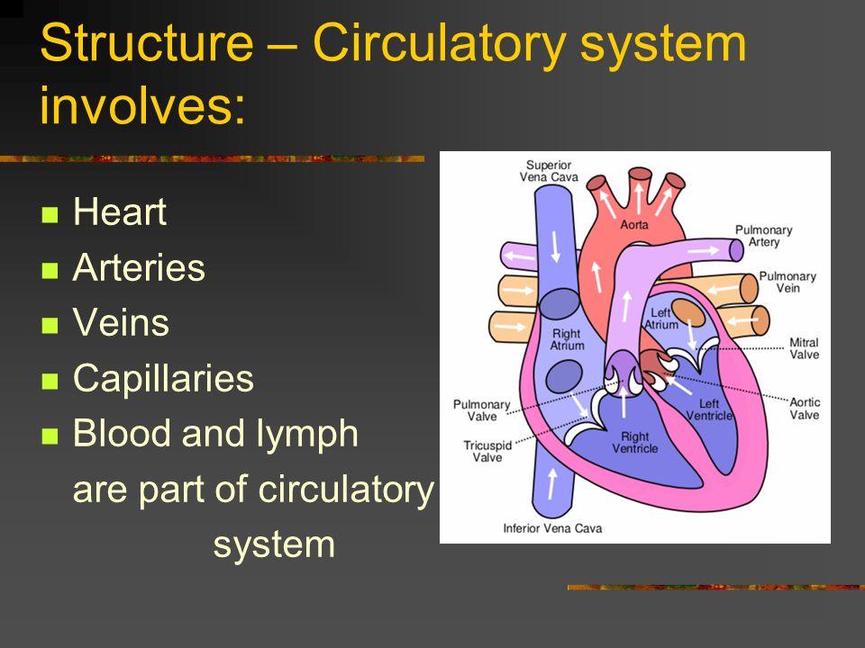 Diagram Of Heart Arteries Vein Capillary - House Wiring Diagram ...
