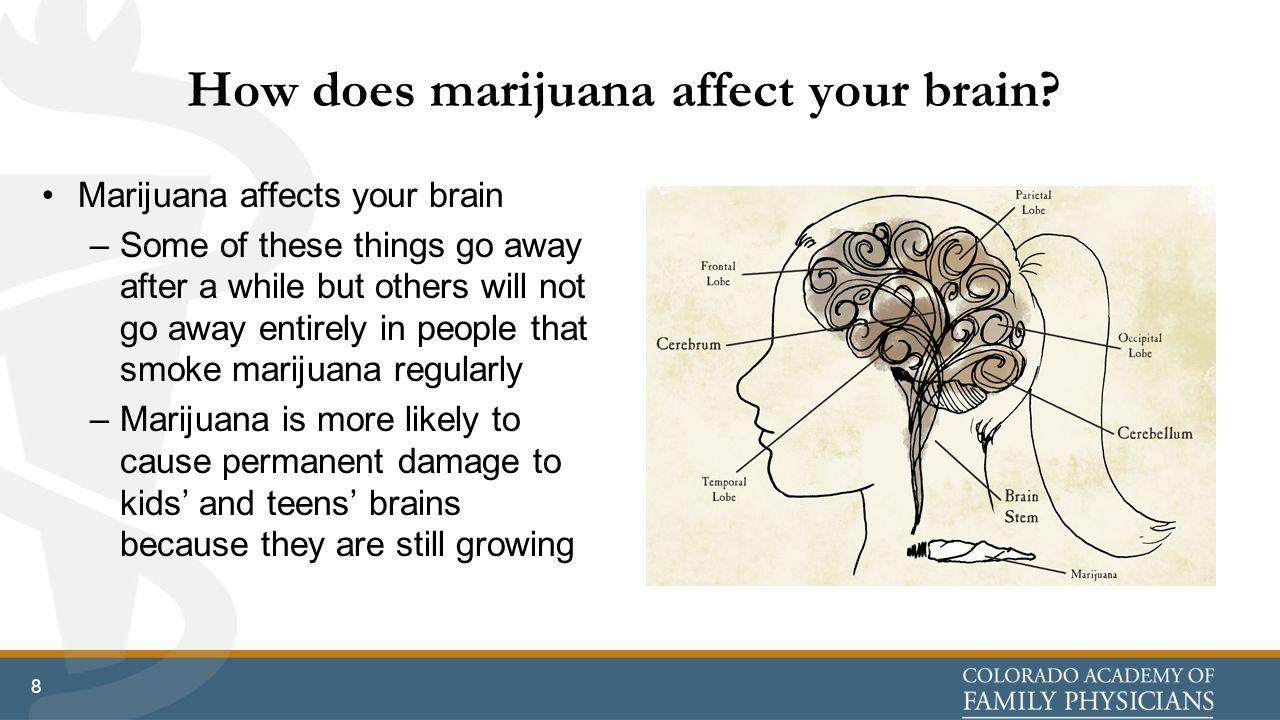 Does marijuana permanently damage the brain