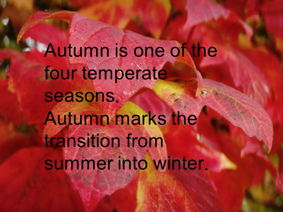 Autumn is one of the four temperate seasons. Autumn marks the transition from summer into winter.