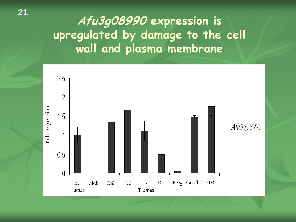 Afu3g08990 expression is upregulated by damage to the cell wall and plasma membrane 21.