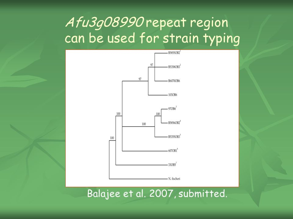 Afu3g08990 repeat region can be used for strain typing Balajee et al. 2007, submitted.