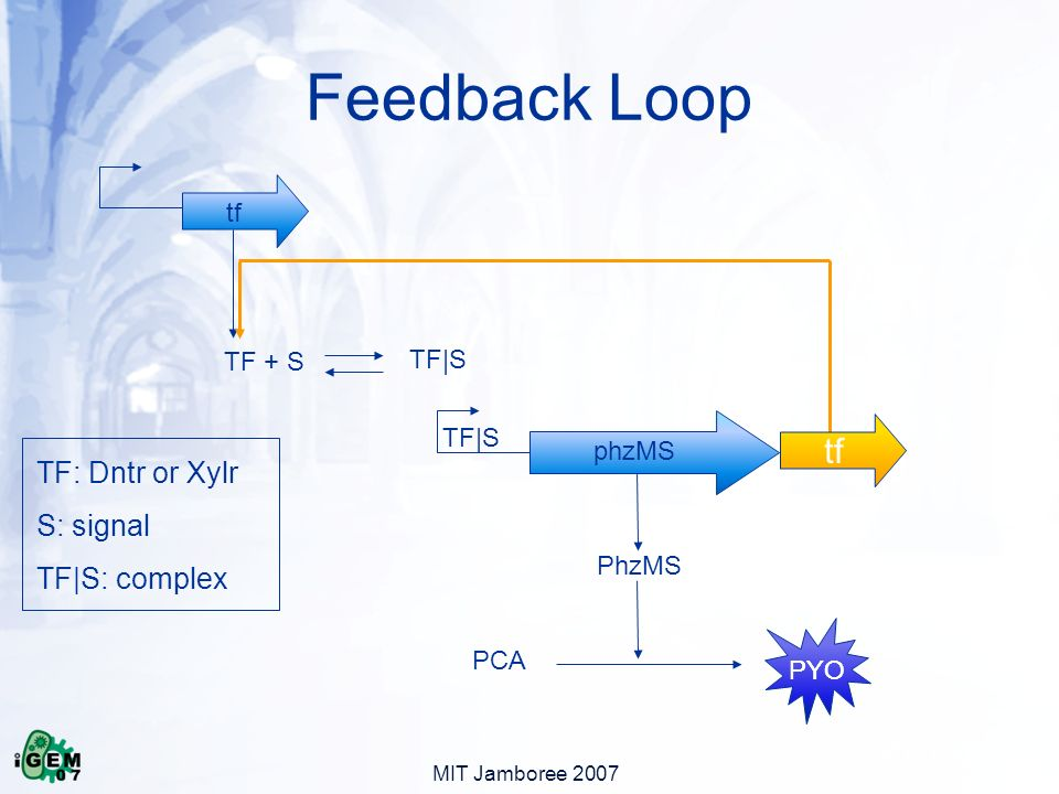 MIT Jamboree 2007 Feedback Loop tf TF + S TF|S phzMS PhzMS PCA PYO TF|S PYO TF: Dntr or Xylr S: signal TF|S: complex tf