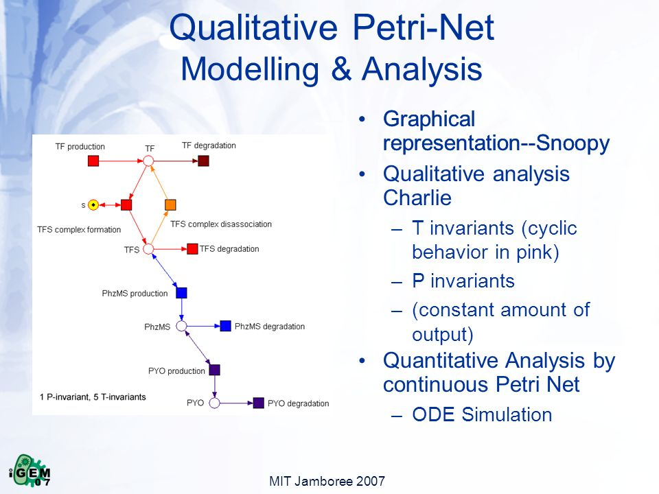 MIT Jamboree 2007 Qualitative Petri-Net Modelling & Analysis Graphical representation--Snoopy Qualitative analysis Charlie –T invariants (cyclic behavior in pink) –P invariants –(constant amount of output) Quantitative Analysis by continuous Petri Net –ODE Simulation